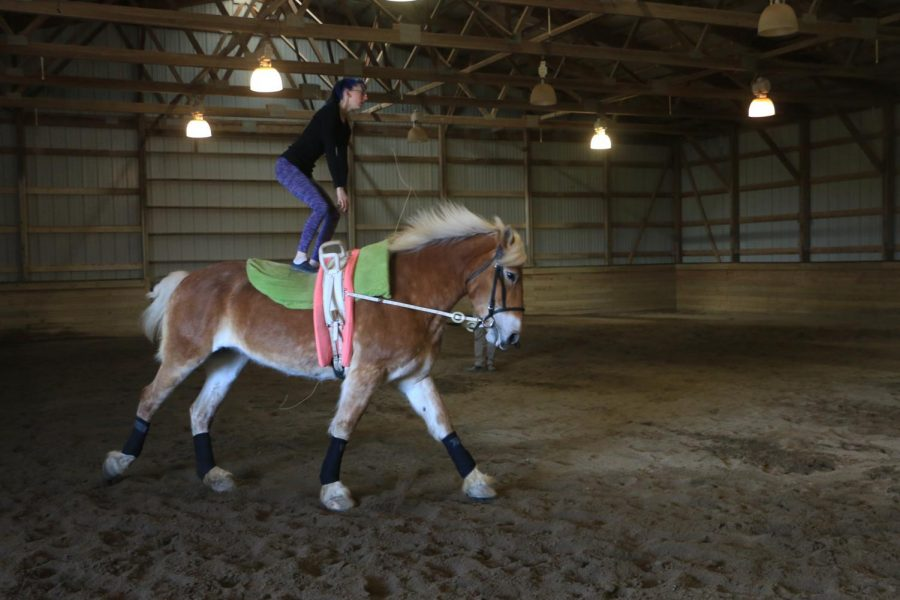 Junior Jenna Presley practices freestyle equestrian vaulting on her vaulting horse, Tiffany. During freestyle exercises, the vaulter typically performs choreographed movements such as mounts, dismounts, standing and various aerial moves.